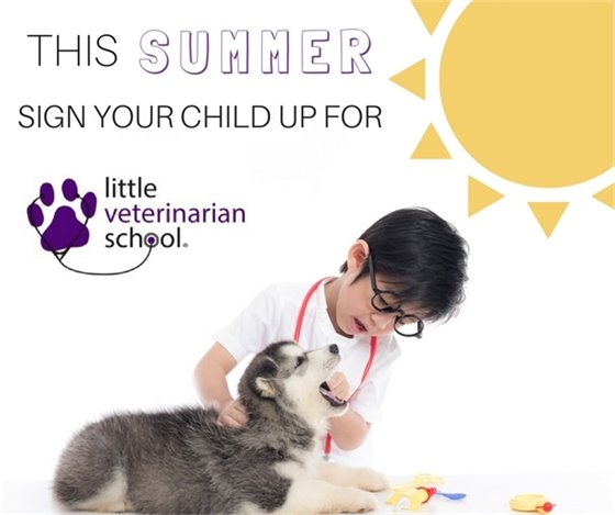 Little Veterinarian School