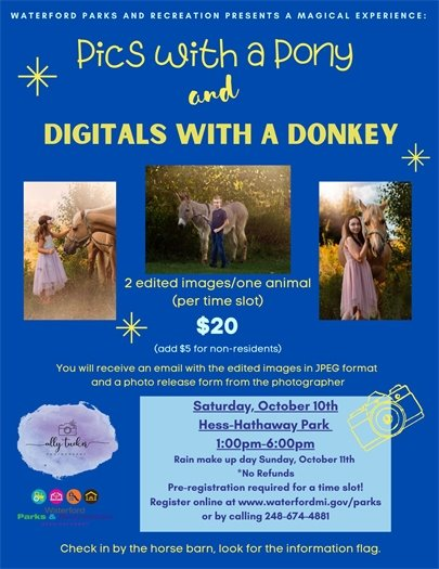 Pony and Donkey Pictures