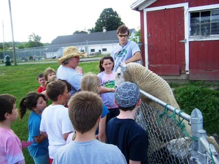 2010 Farm - Petting Sheep